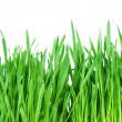 Fresh green grass isolated on white background — Stock Photo