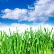 Royalty-Free Stock Photo: Grass and cloudy sky