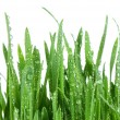 Royalty-Free Stock Photo: Fresh green grass isolated on white background