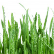 Fresh green grass isolated on white background — Stock Photo #5222883