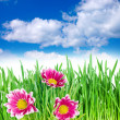 Spring flowers in the grass against the sky - Stock fotografie