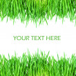 Stock Photo: Fresh green grass isolated on white background