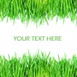 Fresh green grass isolated on white background - Stock fotografie