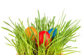 Egg easter in a grass Isolated on white — Stock Photo
