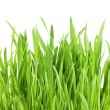 Fresh green grass isolated on white background — Stock Photo #5335665