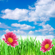 Spring flowers in the grass against the sky — Stock Photo