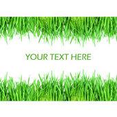 Frisches grünes gras isoliert auf weißem hintergrund — Stockfoto