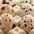 Quail eggs — Stock Photo #4000567