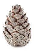 The cone — Stock Photo