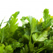 Parsley — Stock Photo #5276315
