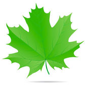 Green maple leaf — Stockvektor