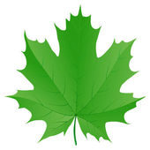 Green maple leaf isolated on white background — ストックベクタ