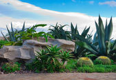 A brick path in the garden with cacti, palm trees against the blue sky with — Stock Photo