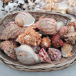 Seashells for selling. - Stock Photo
