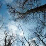 Treetops — Stock Photo #4014040