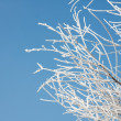 Stock Photo: Winter branches