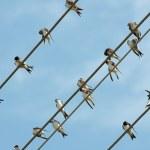 Birds — Stock Photo #4209559