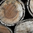 Logs — Stock Photo #4210369