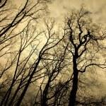 Bomen — Stockfoto