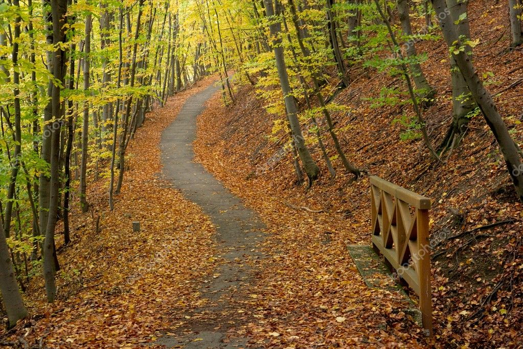 Path going through an autumn forest with fallen leaves — Stock Photo #4290595