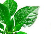 Detail rostlin — Stock fotografie