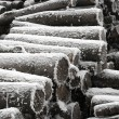 Stock Photo: Logs in winter