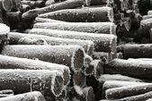 Logs in winter — Stock Photo