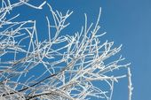 Winter branches — Stock Photo