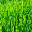 Vibrant Grass — Stock Photo #4931725