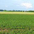 Agricultural Field — Stock Photo #5139348