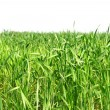 Green Field - Stock Photo
