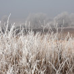 Frost field — Stock Photo
