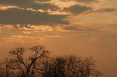 Sky and trees — Stock Photo