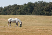 Horse on a filed — Stock Photo