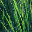 Green grass — Stock Photo #5335413