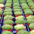 Stock Photo: Small plants lines
