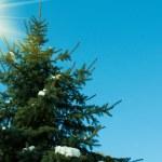 Beautiful green fir-tree — Stock Photo