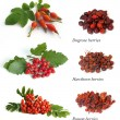 Hawthorn, rowan berry, dogrose — Stock Photo