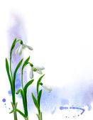 Snowdrops illustration — Stock Photo