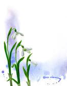 Snowdrops illustration — Stock Photo