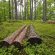 Stock Photo: Dead trees in Forest