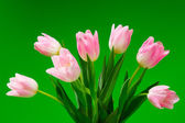 Pink tulips on green background — Stock Photo
