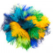 Colored ostrich feather — Stock Photo