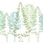 Fir trees, vector — Stock Vector