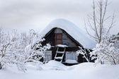 ρωσική σώμα από χειμώνα — Φωτογραφία Αρχείου