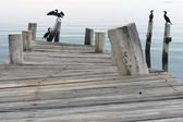 Crooked pier with seagulls — Stock Photo