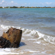 Beach with a tree trunk — Stock Photo