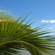 Detail of a palm tree — Stock Photo