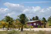 Palm trees and a huose in Belize — Foto de Stock
