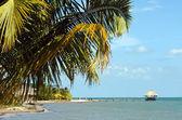 Plaża i palmy — Zdjęcie stockowe